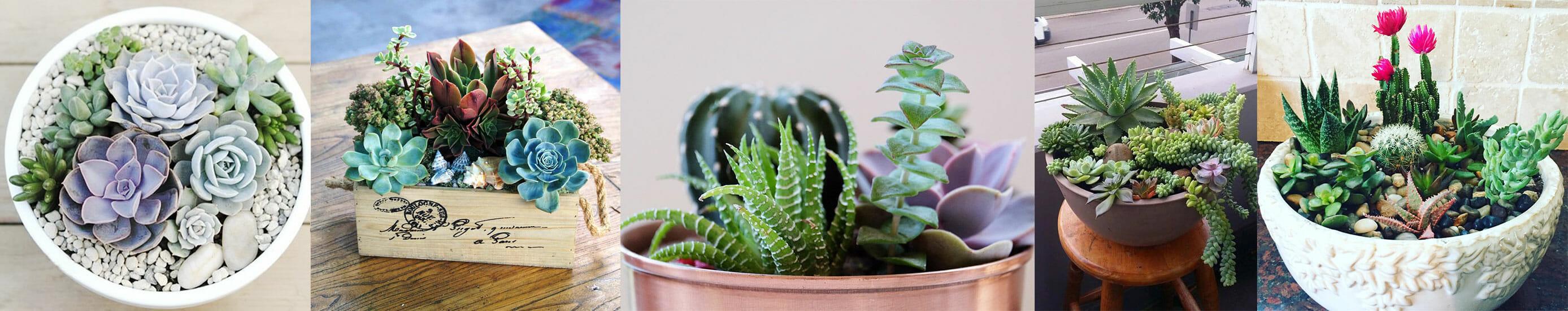 succulents-ideas
