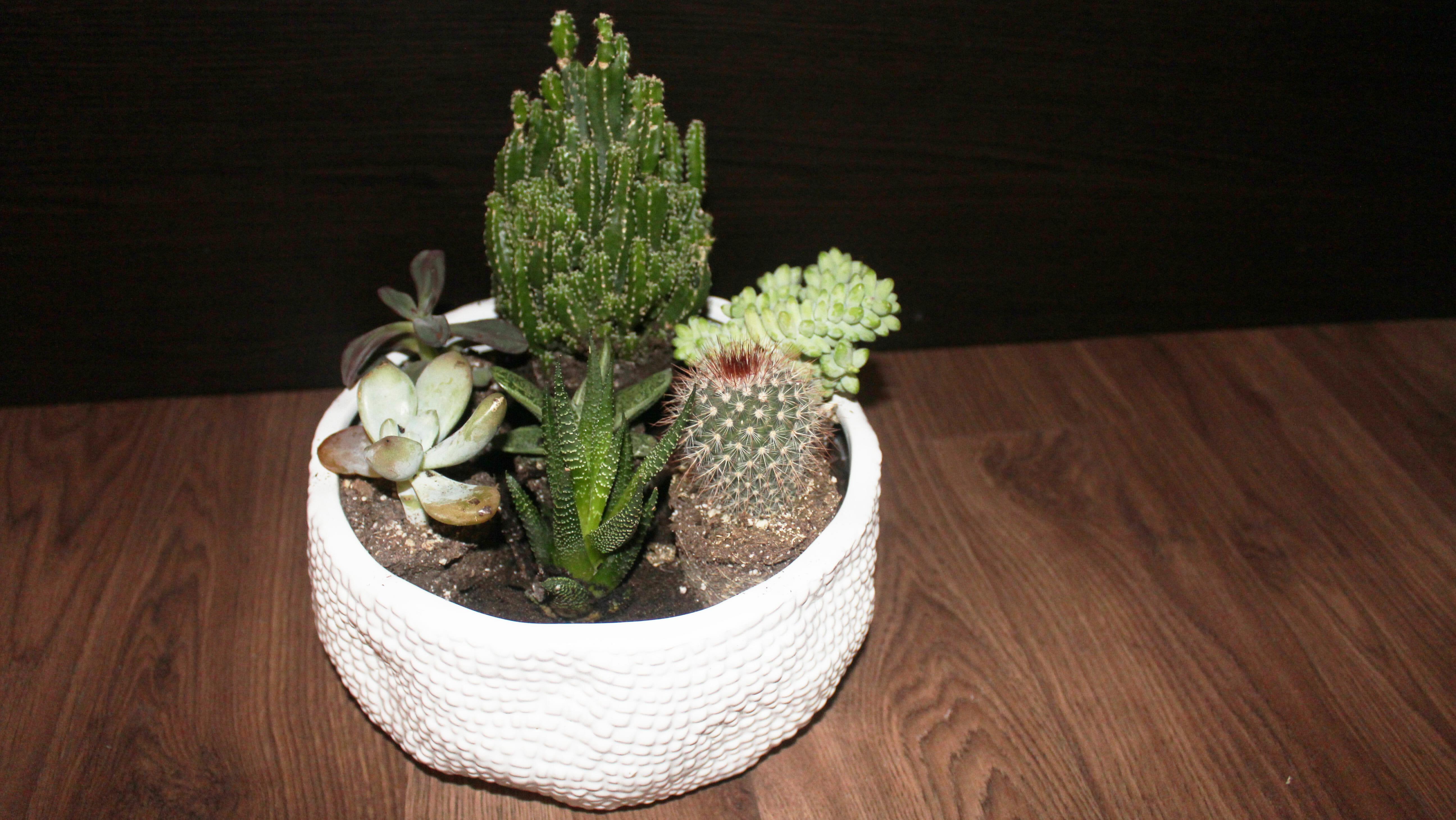 succulents-plant-placement