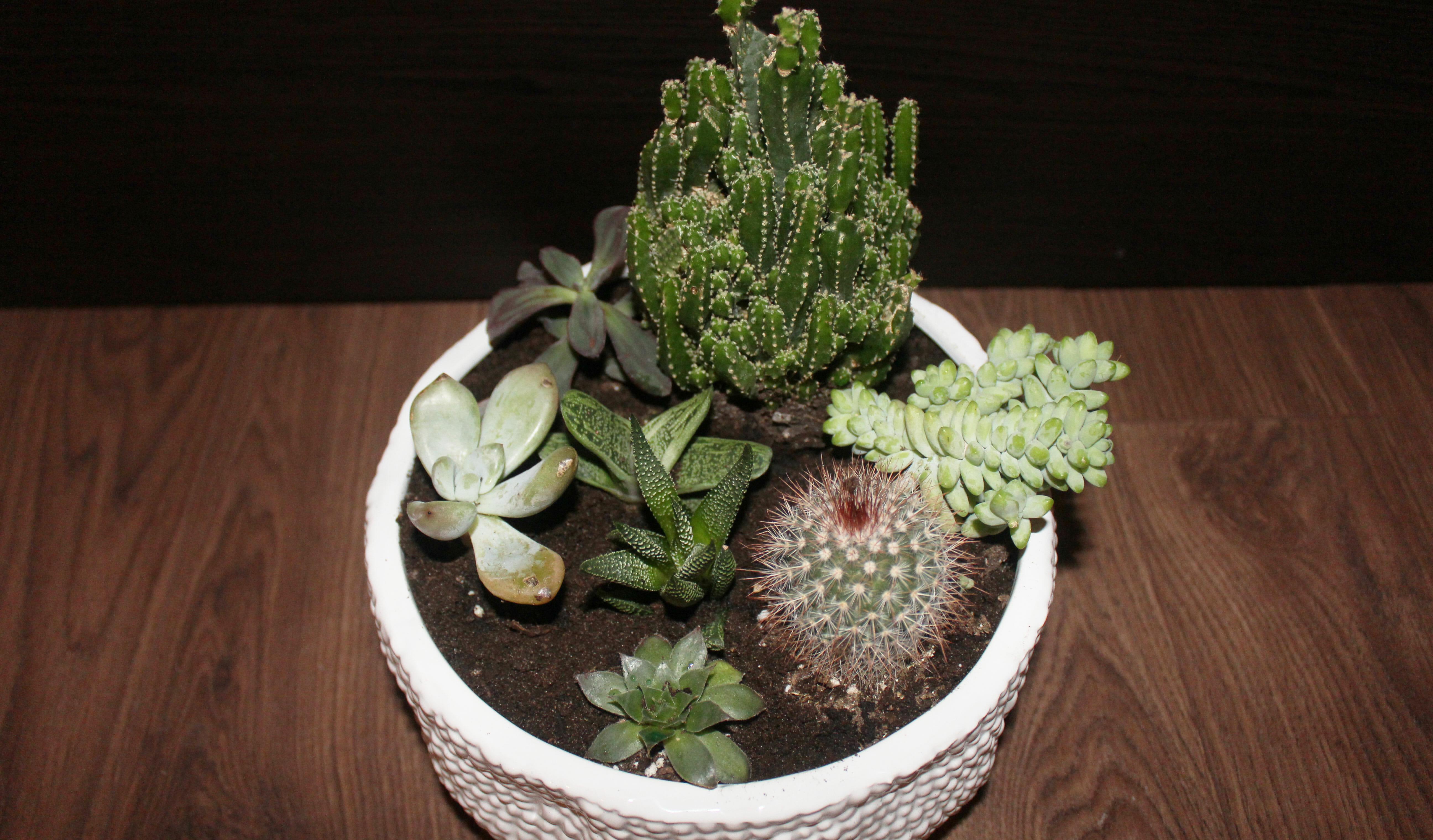 succulents-plant-wiht-soil