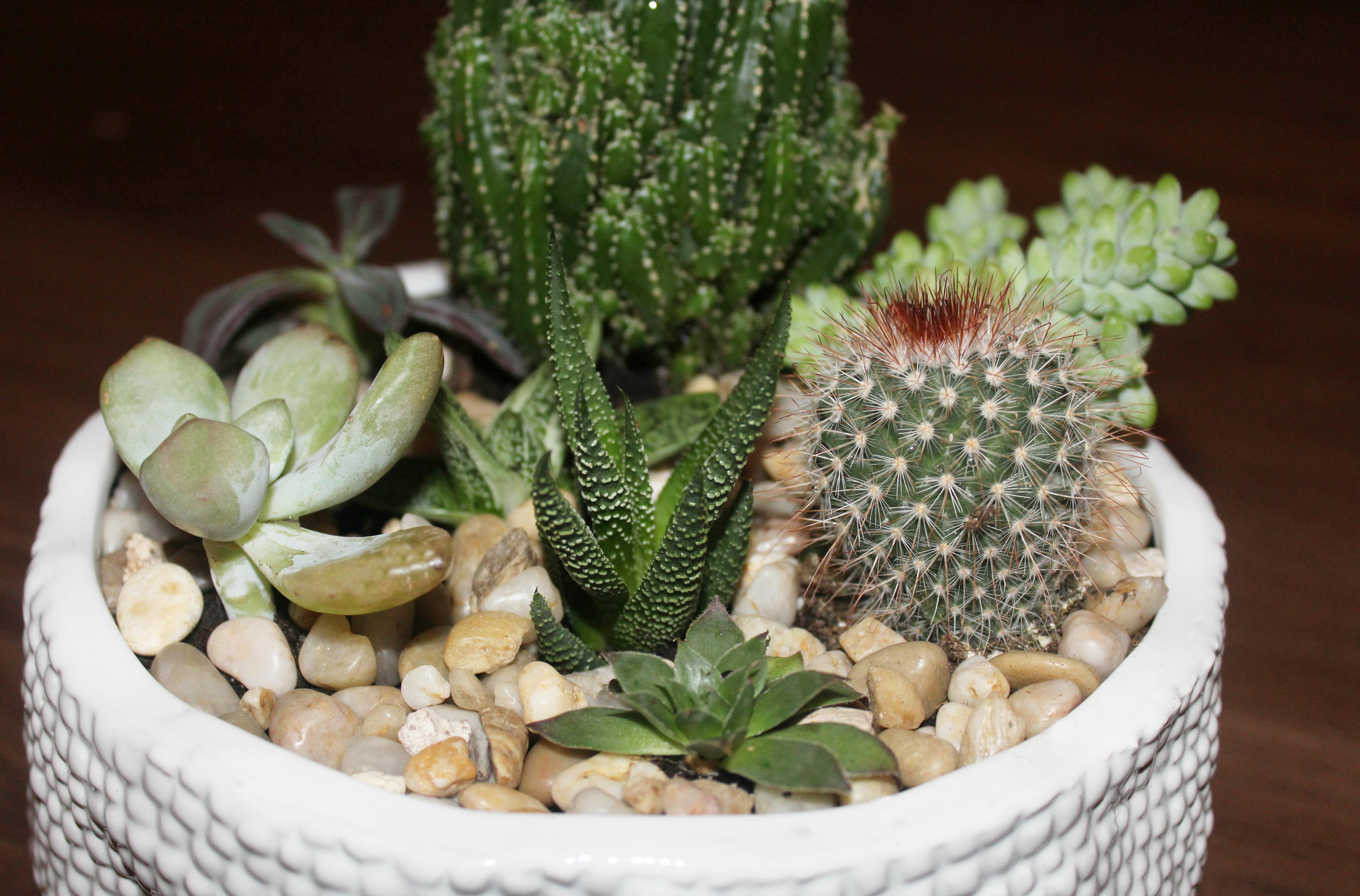 succulents-rocks