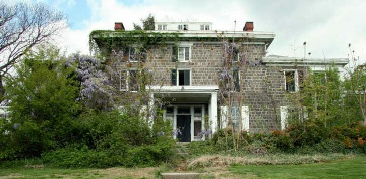 overgrown-garden (2)
